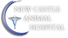 Riverview Animal Hospital